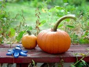 Calabazas alimentos del otoño