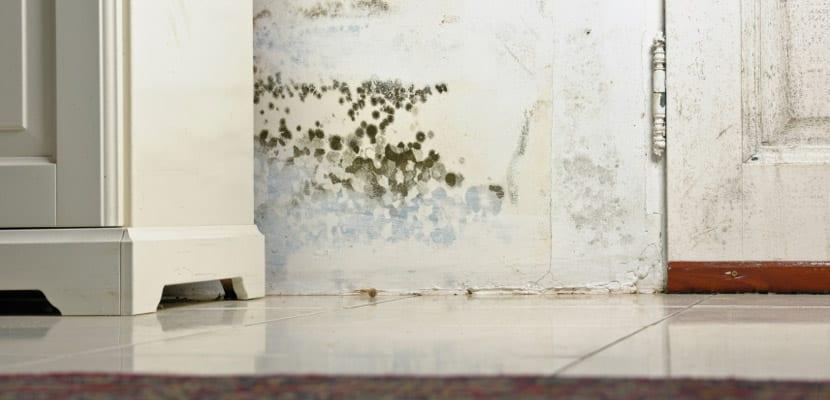 Deshumidificadores para eliminar el exceso de humedad en casa - Humedad en casa ...