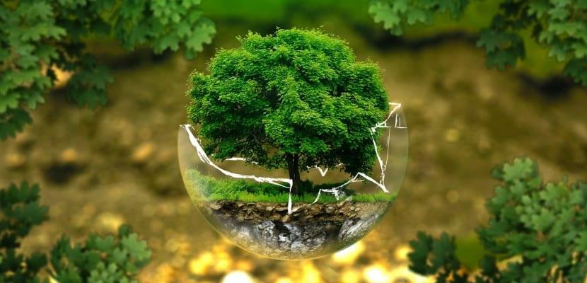 árbol en cristal