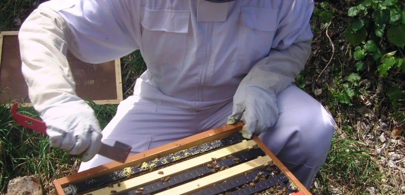 apicultor recolectando