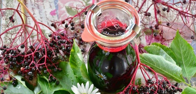 licor de frutas de saúco