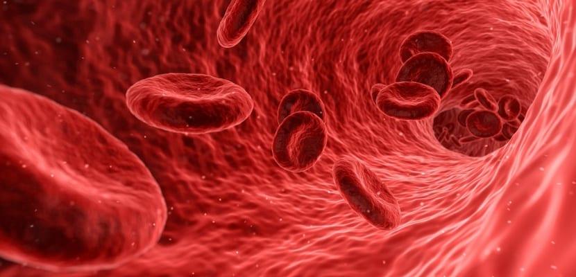 arterias venas