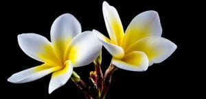florres