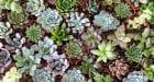 Decora tu hogar con plantas suculentas