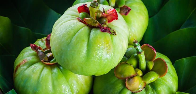 Garcinica cambogia