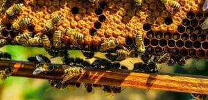panal de abejas y polen