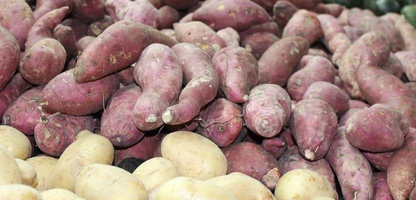 tubérculos patatas y boniatos