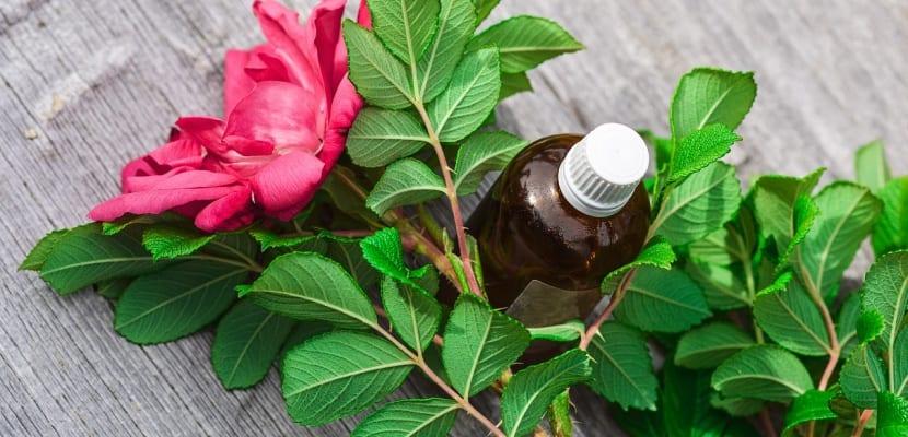 frasco y esencia