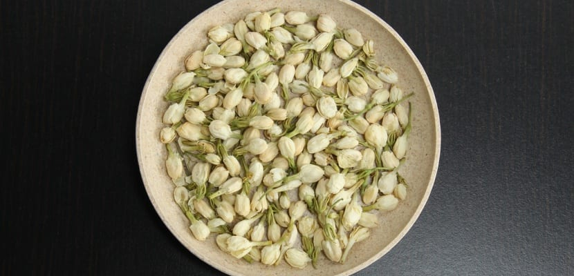hojas de jazmín