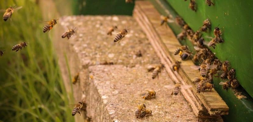 panal y abejas