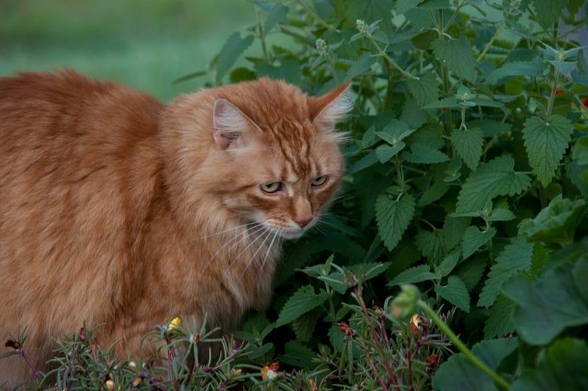 Olores que atraen a los gatos