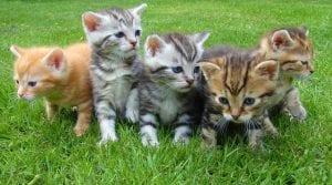 Olores en los gatos