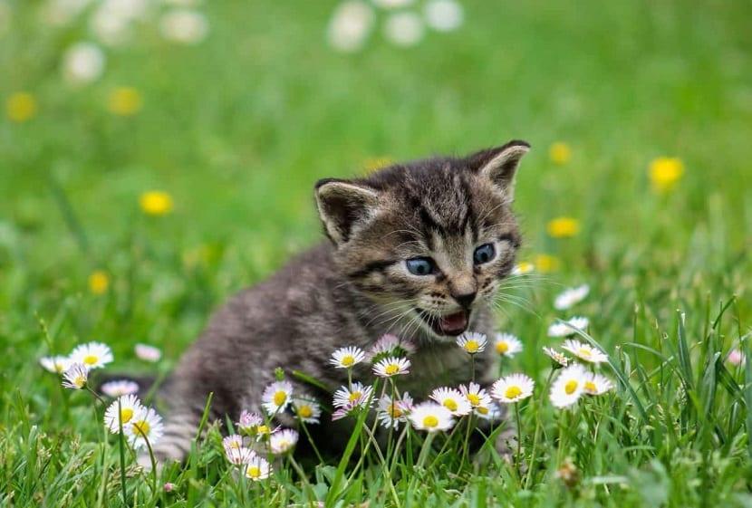 Olor de flores para los gatos