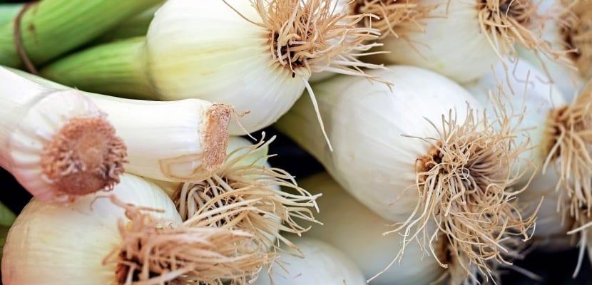 cebolla y puerro