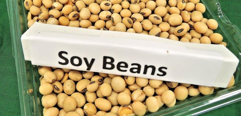 legumbre de soja