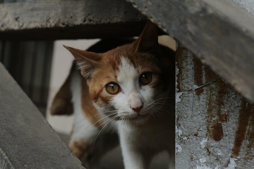 Cuidados del gato callejero