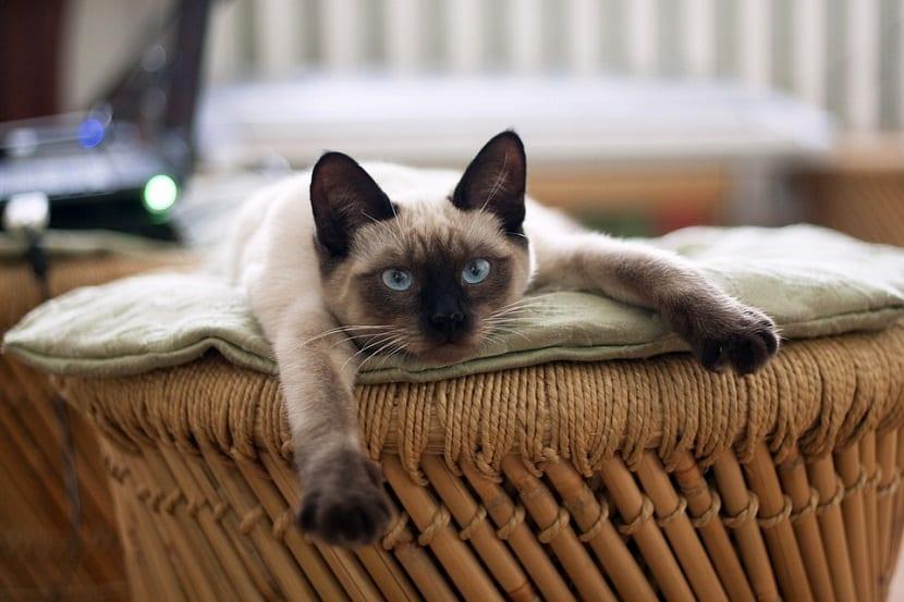 Consejos para gatos callejeros