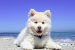 Proteger a tus mascotas del calor