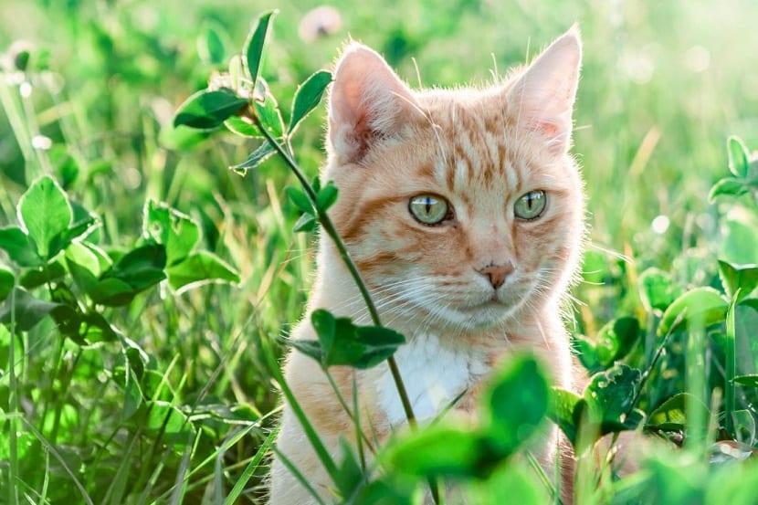 Cuidara los gatos en verano