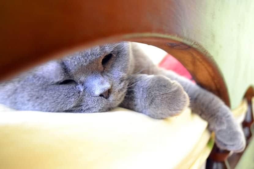 Dónde dejar el gato en vacaciones