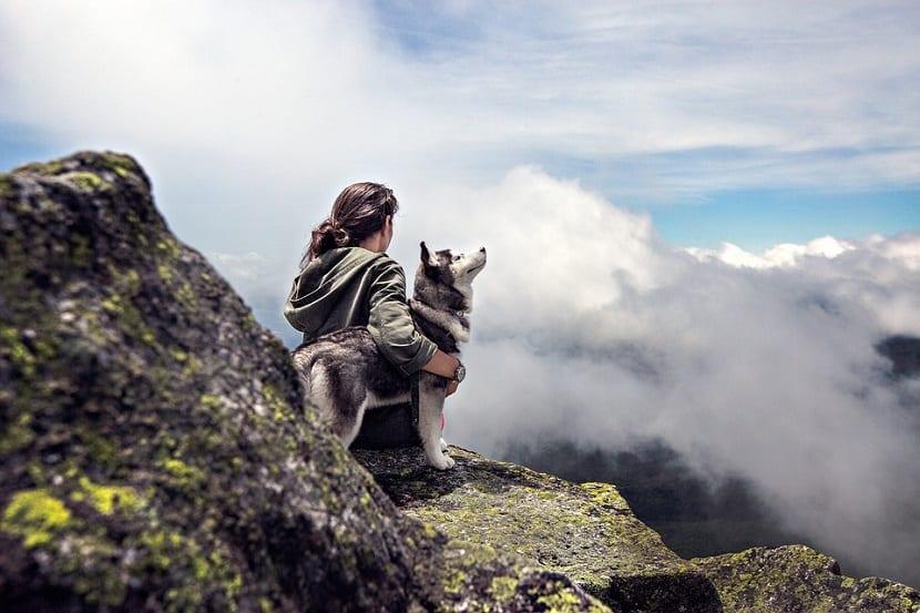 Emociones compartidas con perros