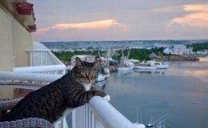 El gato en vacaciones
