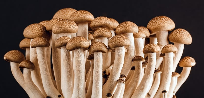 hongos pequeños