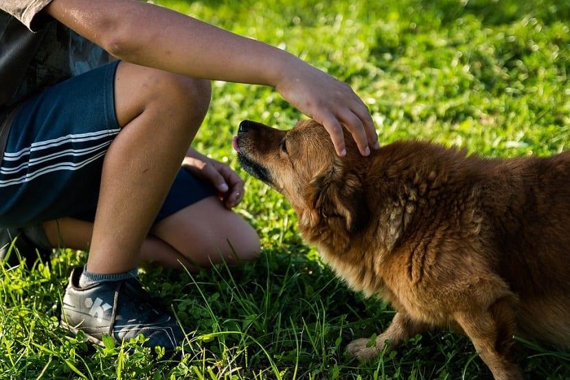 Los perros reconocen nuestro estado de ánimo