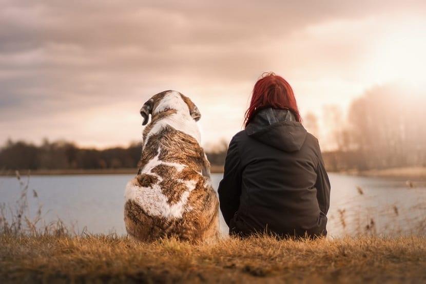 Los perros reconocen emociones humanas