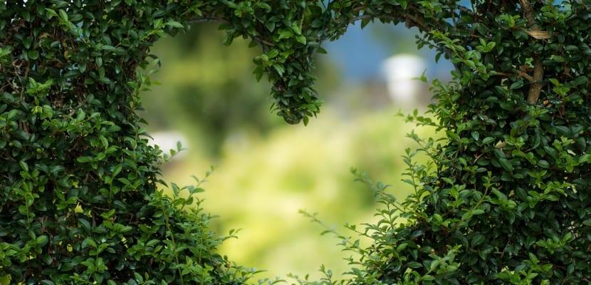 planta con corazón