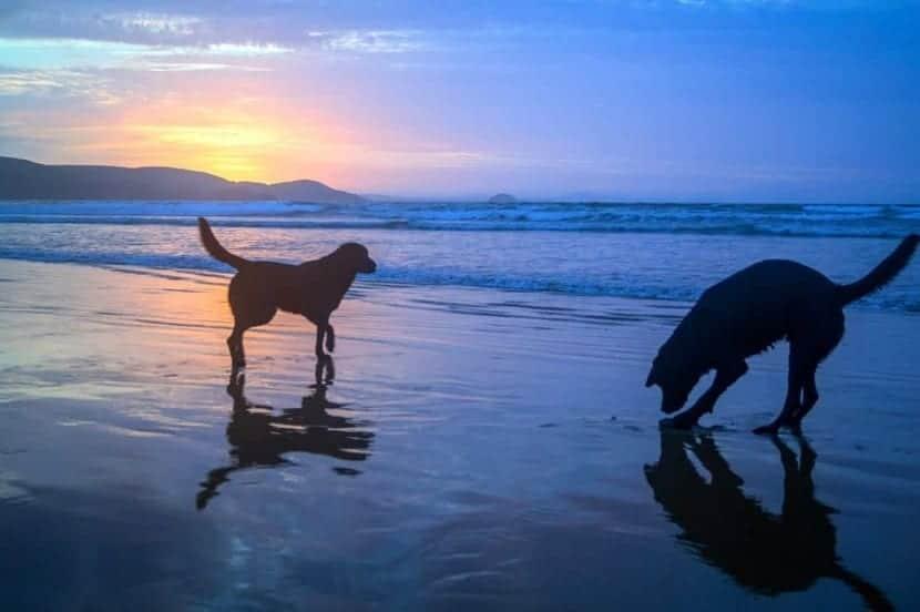 Playas para animales