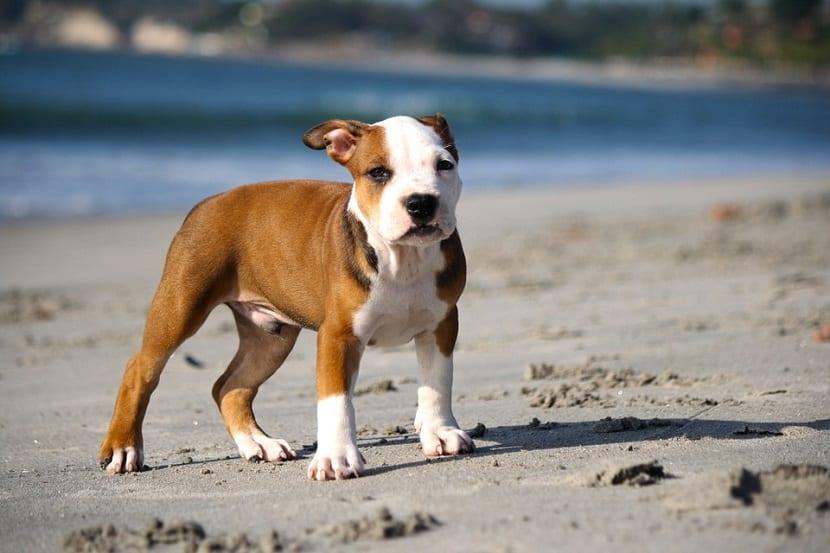 Viajar con perros a la playa