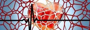 corazón y arterias