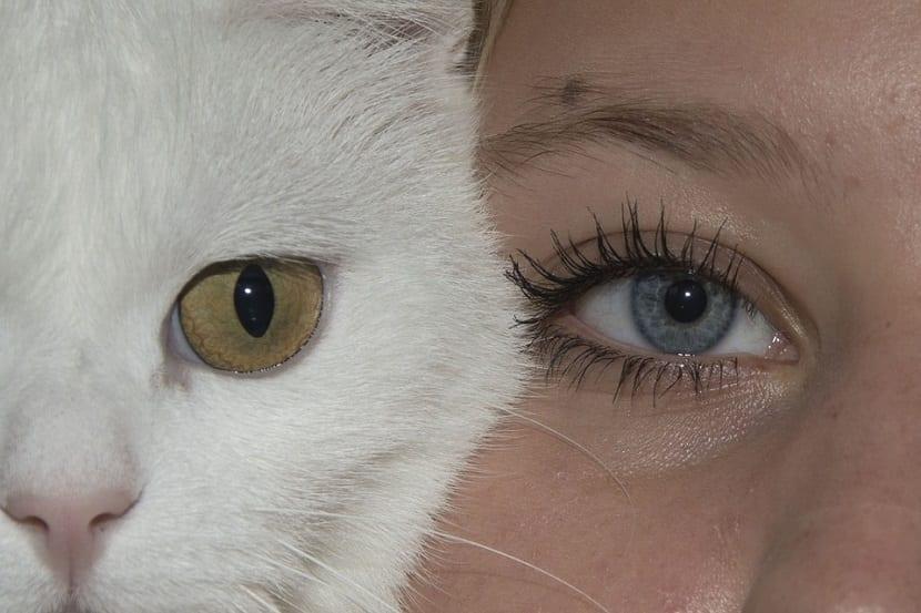 Demostraciones cariñosas en gatos