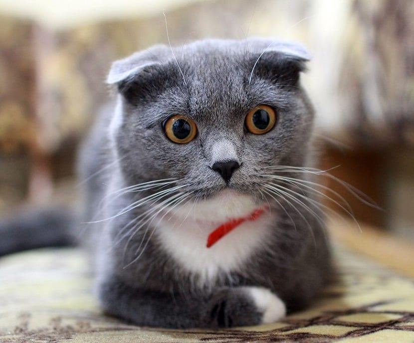 Problemas de salud en gatos