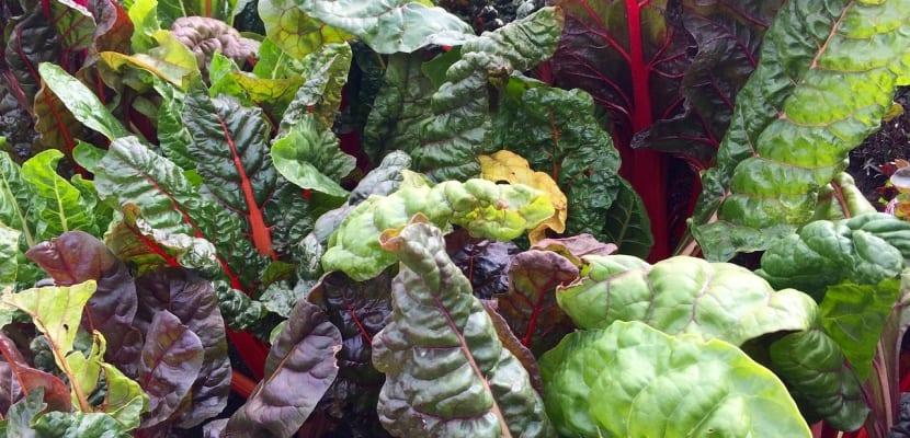 vegetales d ehoja verde