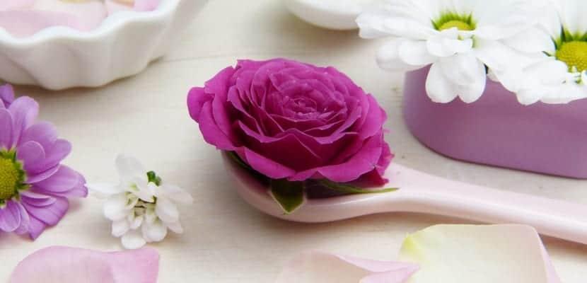 rosa con cuchara belleza