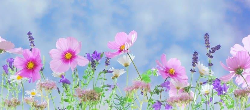 plantas púrpura