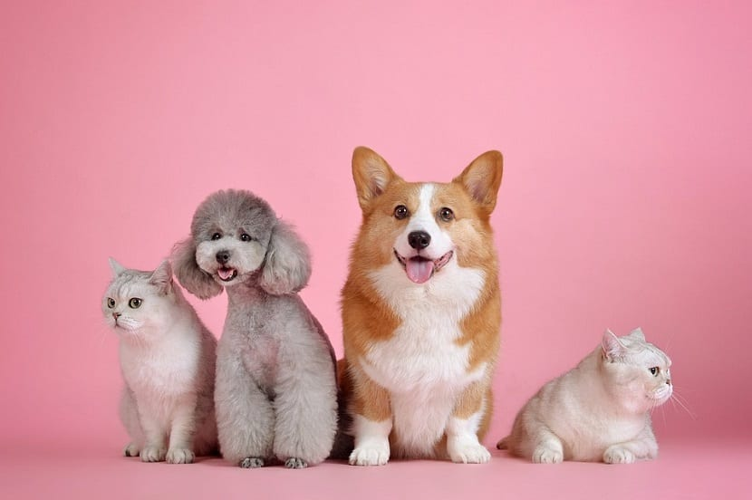 Adoptar mascotas