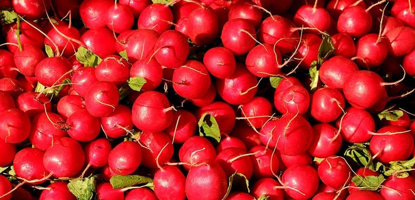 Rábanos rojos