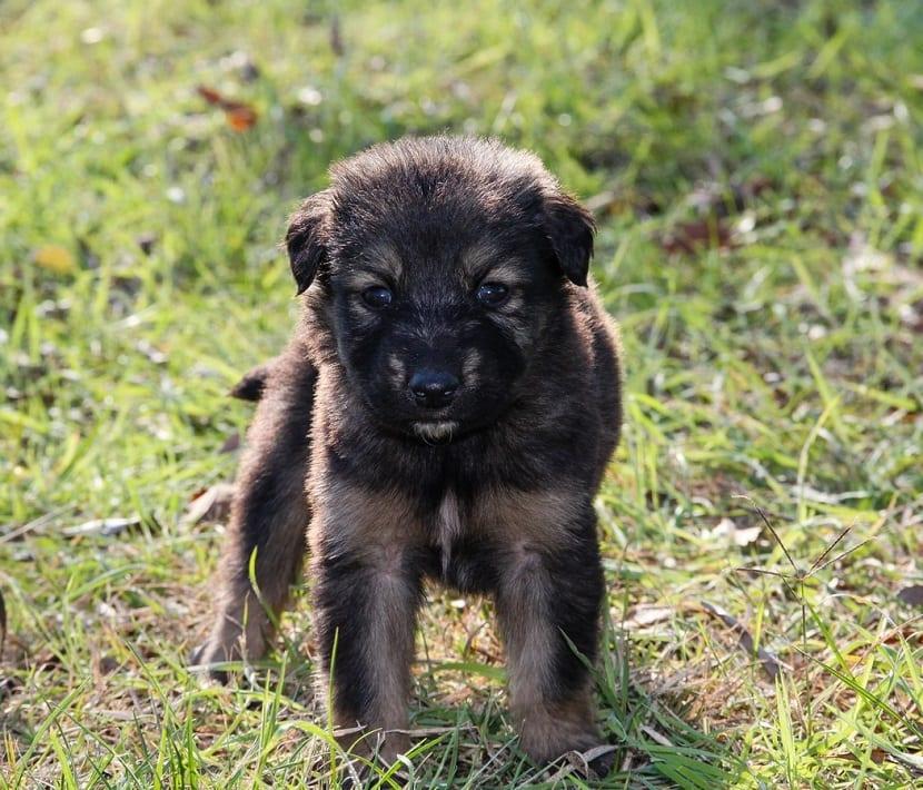 Requisitos para adoptar mascotas