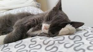 Ventajas de dormir con tu mascota