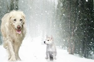 Cuidar las mascotas del frío