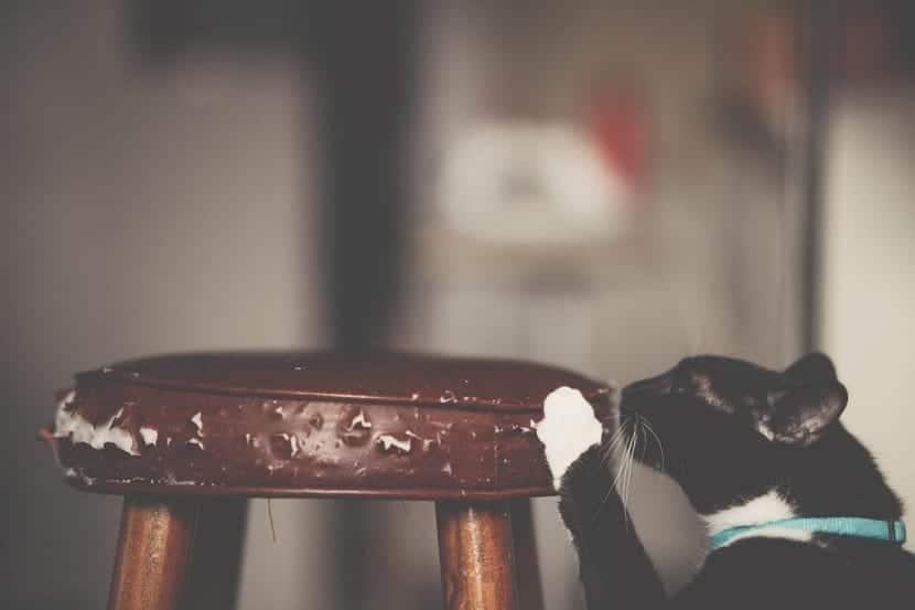 Para que los gatos no arañen muebles