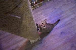 Rascador para gatitos