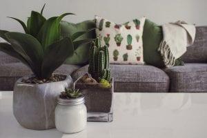 Decorar con plantas en el salón