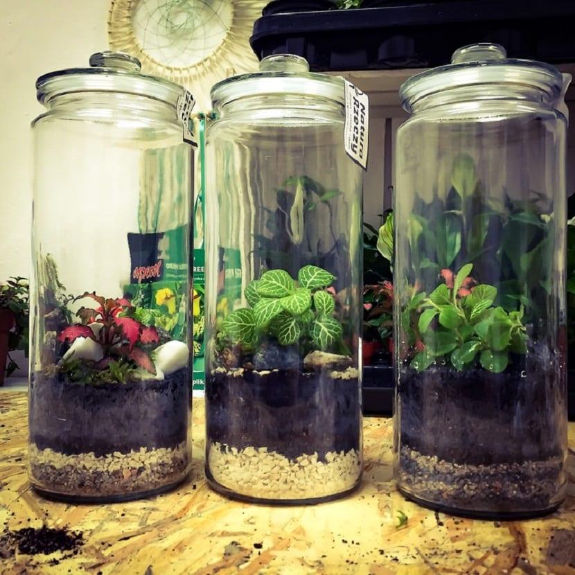 Decorar con plantas en frascos de cristal