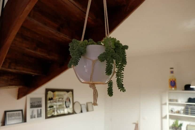 Planta colgante decor