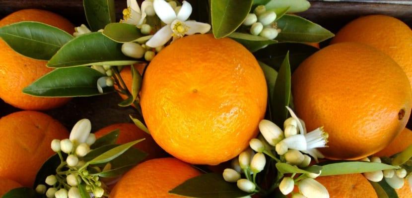naranjas y flor de azahar