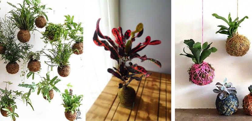 Plantas para kokedama